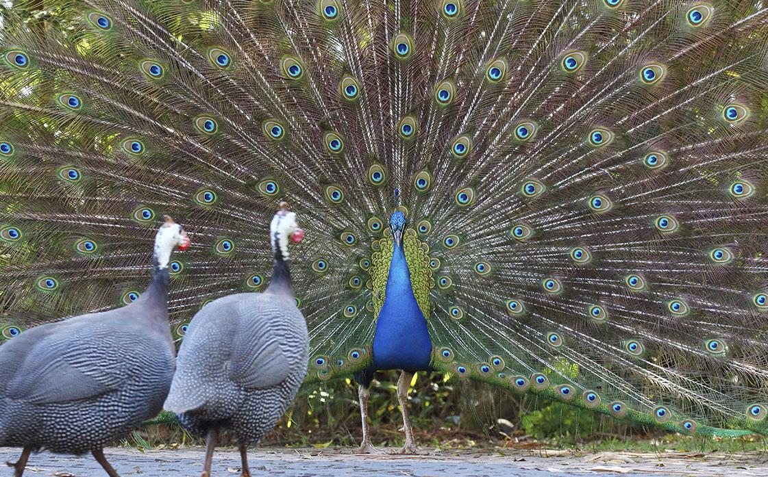 Animais do Parque Os animais do Memorial Parque das Cerejeiras trazem beleza e contato com a natureza.
