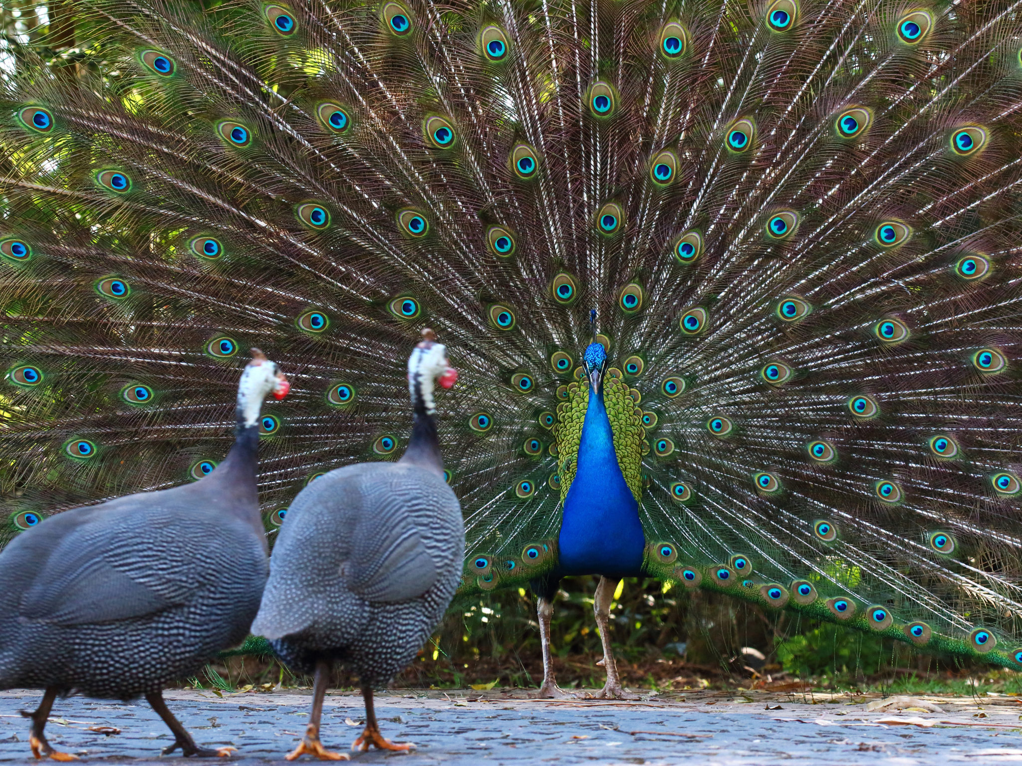 Em contato com a natureza: conheça os animais no Parque das Cerejeiras.