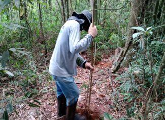 Enriquecimento do bosque do Cerejeiras com 530 novas árvores plantadas!