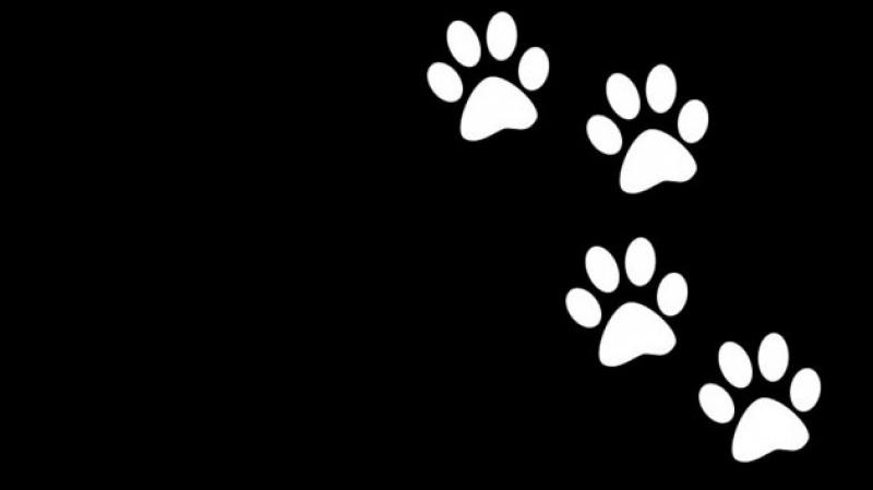 O Luto dos animais – Será que os animais têm consciência da morte?